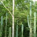 @ Reserva Biologica Caoba