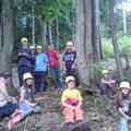 Walddörfer bauen