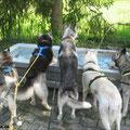 Hundeknigge: Darf man in einem öffentlichen Brunnen baden?