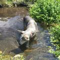 Rainey ist die Einzige, die ab und zu so richtig ihre Bahnen durch den See zieht, doch heute mag sie auch nur planschen.