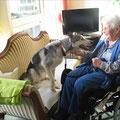 Als Therapiehund Menschen Freude bringen