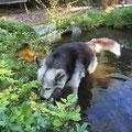 Borea nimmt oft ein Kurbad, dabei achtet sie aber darauf, dass ihr das Wasser nicht weiter als bis zum Bauch kommt, sie ist ja schliesslich eine Principessa!