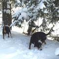 Winterspaß mit Berta