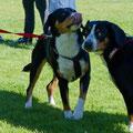 Berta und Dorli beim Kurzhaartreffen in Spittal am Phyrn