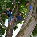 Im Baum ist der Schatten am besten.