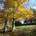 Wunderschöner Herbstausritt
