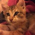 Lily (2 mois) 15 Decembre 2015