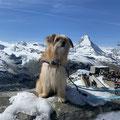 Lasko fête ses 5 ans au Cervin / Lasko feiert  seinen 5. Geburtstag beim Matterhorn