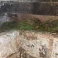 ...unter dem Boden in einem Zwischenraum schlief der Igel im frisch gemachten Nest