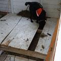 ...so dass Yuma kontrollieren konnte, ob sich kein weiterer Igel unter dem Boden befand...