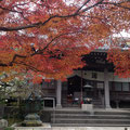 安国論寺の紅葉