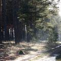 Winterwald: Ein Weg vom Gästehaus in den Wald