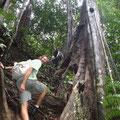 Klettern im Urwald auf kaum ersichtlichen Pfaden