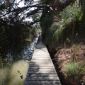 Über Stege gehts durch die Mangroven