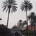 Riesige Palmen auf Plätzen und als Alleen