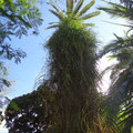 Üppige Vegetation im botanischen Garten