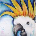 Kakadu I, 40 x 50 cm, Aquarell