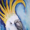 Kakadu III, 40 x 50 cm, Aquarell