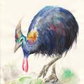 Kasuar III, Aquarell, 21 x 29,7 cm