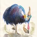 Kasuar IV, Aquarell, 21 x 29,7 cm