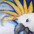 Kakadu II, 40 x 50 cm, Aquarell
