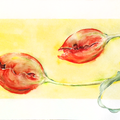 Carnivor, ca. 70 x 35 cm, Aquarell auf Papier