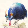 Kasuar II, Aquarell, 21 x 29,7 cm
