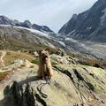 Toya dans les magnifiques montagnes Suisse