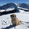 Sira: magnifique le printemps dans les hautes montagnes suisses / Frühling in den Bergen