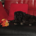 Pina adoptée par Aquilina M. (66)