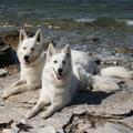 Jukon & Inja