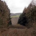 Schneise im Wald.  Die Trasse einer ehemaligen Drahtseilbahn von der Grube in Hockweiler zur Erzwäsche nach Gusterath-Tal