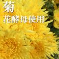 菊花酵母使用