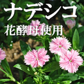 ナデシコ花酵母使用