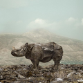 Rhino, 2014  Edition 7 of 15/1AP  156 x 126 cm Museomaxxprint, Museumskarton, framed behind glass