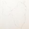 Botanisches Zeichnen: Callablatt, Bleistiftvorzeichnung I