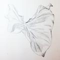 Botanisches Zeichnen: Callablatt, Bleistiftvorzeichnung II