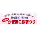 小田原かまぼこ桜祭り