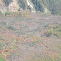 東斜面紅葉。