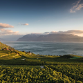 Lavaux, Abendstimmung © Switzerland Tourism