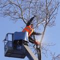 обрезка деревьев в таганроге