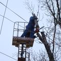 кронирование деревьев таганрог