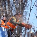 спилить дерево в Таганроге