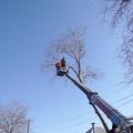 удаление деревьев в таганроге
