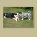 Les problèmes comportementaux canins