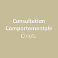 Consultation comportemental chiots
