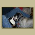 Quelles sont les problèmes comportementaux canins