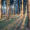 """2. Platz (Mittelstufe): """"Die Riesenschatten der Bäume"""" von Mira"""