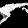 Pelikanaal