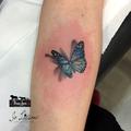 farfalla; mariposa; tattoofarfalla; butterflytattoo; 3dtattoo;